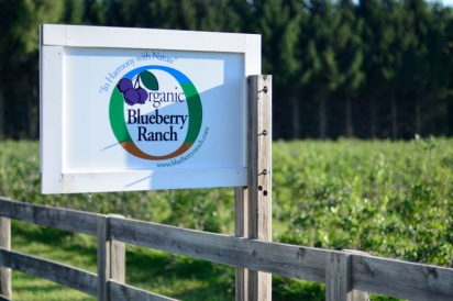 blueberry ranch mishawaka largest certified organic blueberry farm in midwest